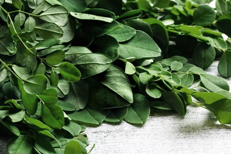 リンガの葉