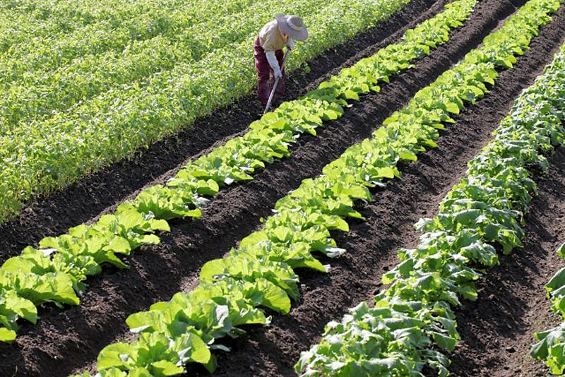 素材の質の高さをアピールできる! 店専用の自家農園を持つ方法